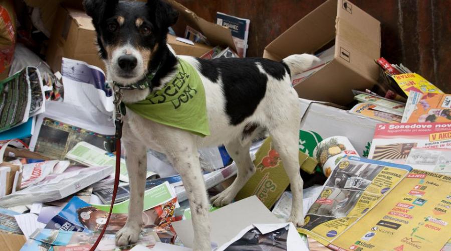 Šesta akcija - šesti rekord v zbiranju starega papirja za zapuščene živali