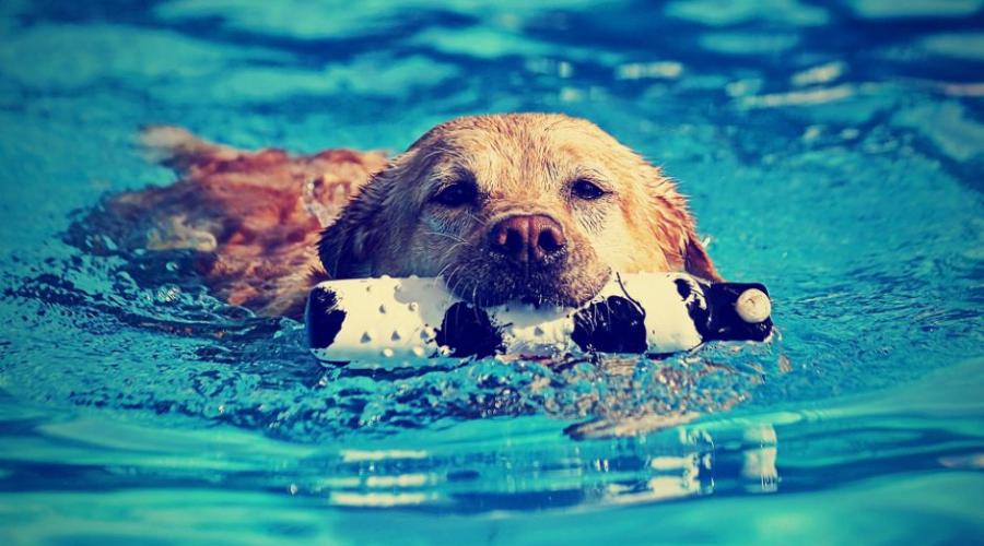 Kako živalim olajšati vroče dni
