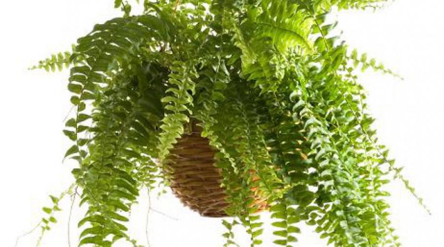 Nega sobnih rastlin v zimskem času