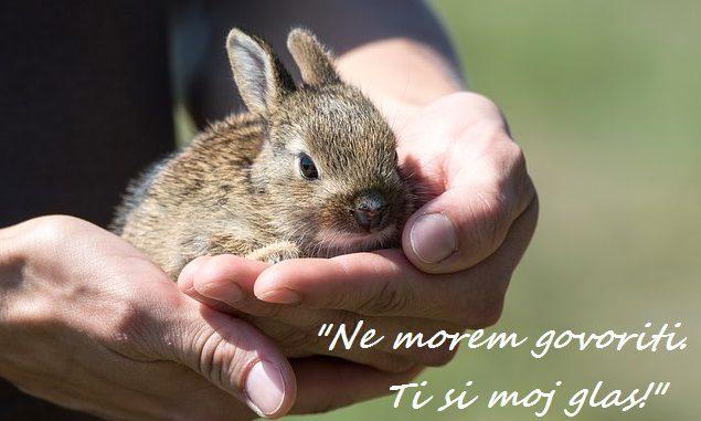 Svetovni dan živali: o živalih se moramo učiti, da jih bomo spoštovali in jim pomagali