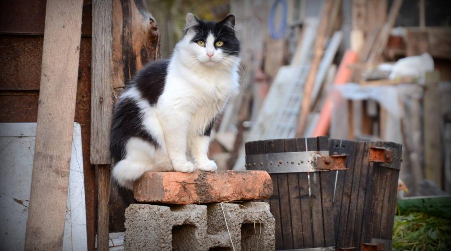 Občina Medvode: pomoč občanom pri sterilizaciji in kastraciji mačk