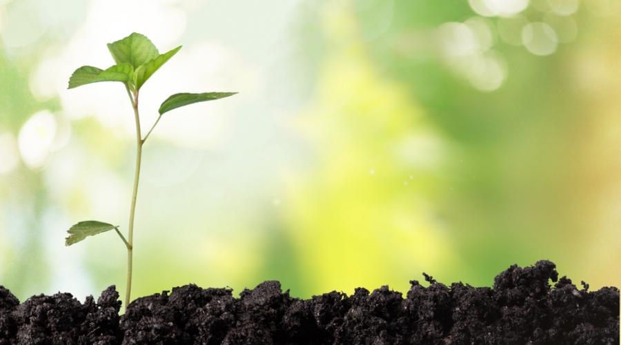 Svetovni dan Zemlje: Drevesa za Zemljo
