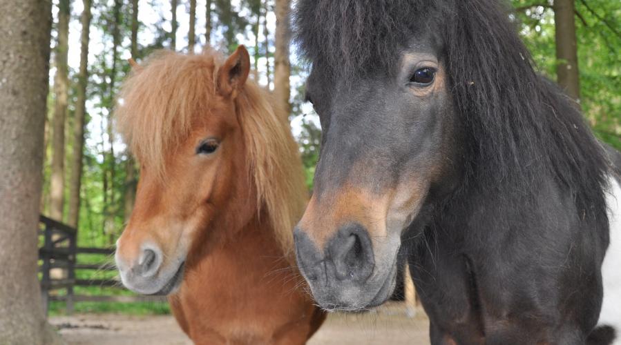 Ranč Weter – kjer konji končno najdejo prepotreben mir