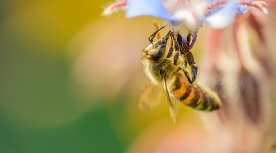 Julij, mesec biodiverzitete in čebel v Zeleni prestolnici Evrope