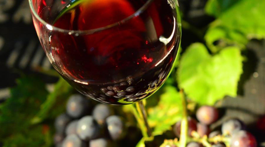 Znani vinski šampioni, tudi BIO vino