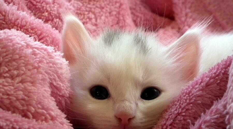 Svetovni dan mačk: mačke nas potrebujejo