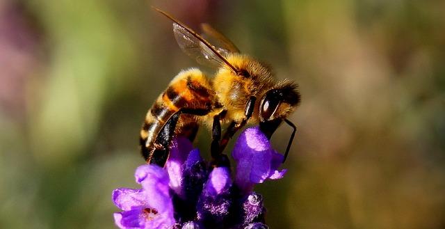 Na prvem mednarodnem festivalu čebelarskih filmov bo tudi Slovenija