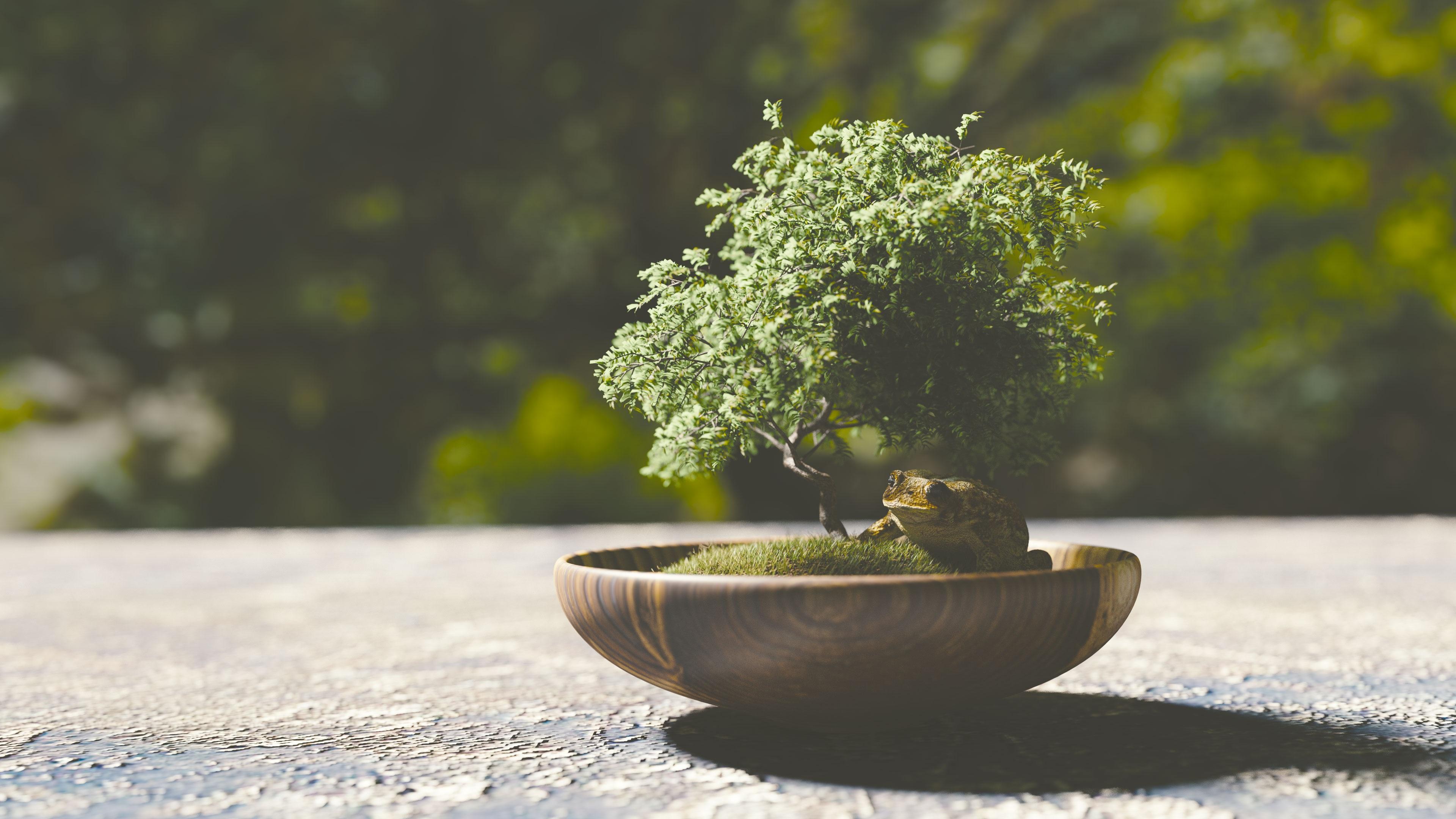 Mednarodna razstava bonsajev: Najboljši v srednji Evropi