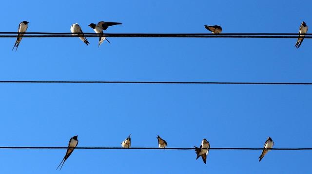 Evropski dan opazovanja ptic: osupljive selitve