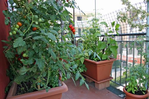 Jesenski vrt na balkonu