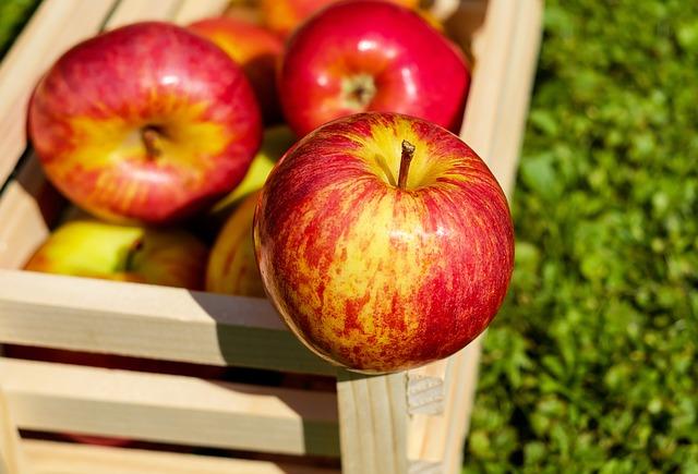 Praznik topliškega jabolka v Dolenjskih Toplicah