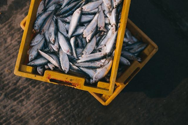 Ribe in morski sadeži: ali vemo, kaj kupujemo?