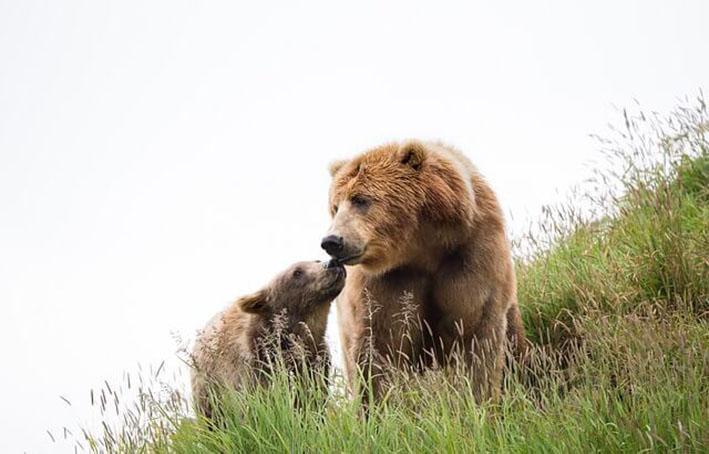 Romunija popolnoma prepovedala trofejni lov na medveda, volka, risa in divjo mačko