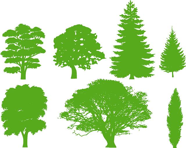Poznate drevesa v svoji okolici?