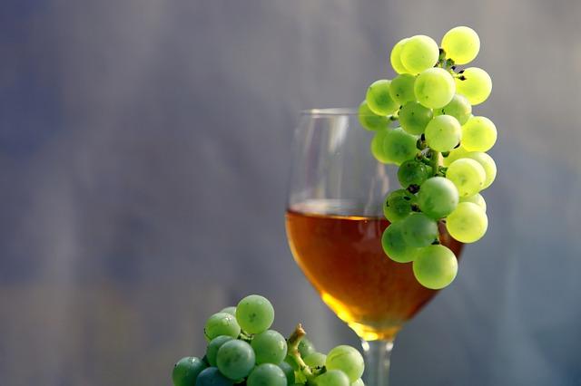 Zanimivosti o vinu