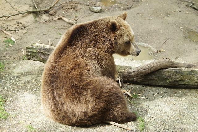 Polletni nadzor nad živalskimi vrtovi med 17 vrstami živali pokazal 3 neustrezne bivalne razmere
