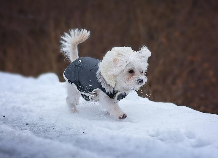 Kako zimo narediti prijetnejšo za pse?