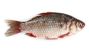 riba-prehrana
