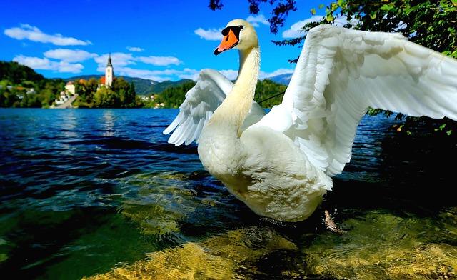 Trenutki iz življenja ptic na Bledu
