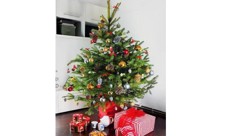 Zeleno drevo: ko novoletna smreka po praznikih živi naprej