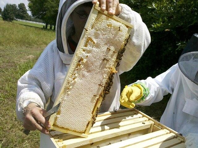 Bo Slovenija dobila mednarodno šolo za čebelarstvo?
