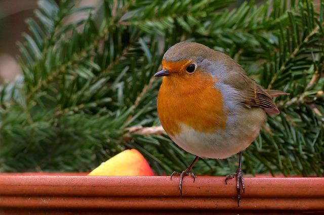Poznamo ptice okoli nas? Vrabci, sinice, kosi, taščice ...