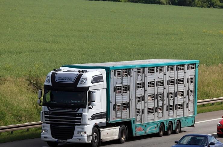 Kampanja evropske organizacije proti prevozom živih živali: 'Stop the trucks'