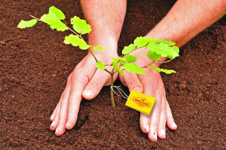 1001 Cvet ima namen darovati 10.000 sadik za obnovo slovenskih gozdov