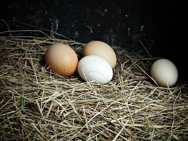 Hofer prvi v Sloveniji iz svoje ponudbe umaknil jajca iz baterijske reje