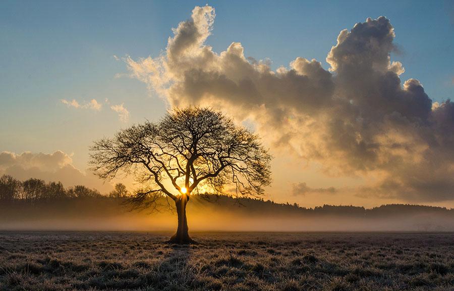 Koliko je vredno drevo?