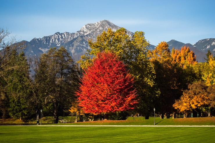 Park Brdo - priložnost za oddih ali rekreacijo