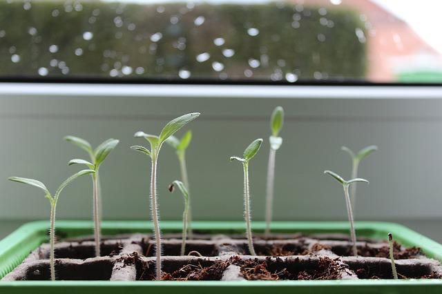 Pomlad prihaja: prva letošnja Zelemenjava in izmenjava semen