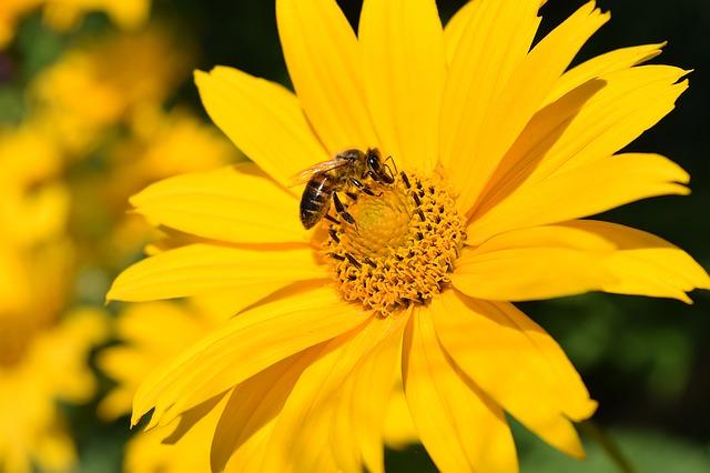Svetovni dan čebel od zdaj tudi na spletu