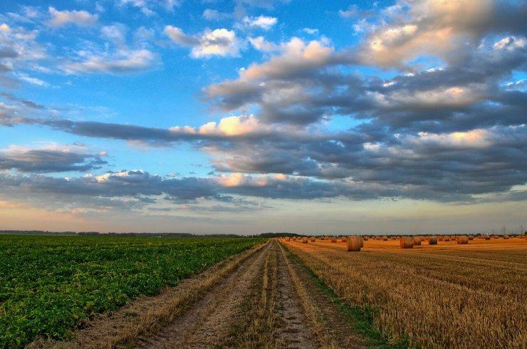 Vpliv podnebnih sprememb na pridelavo hrane