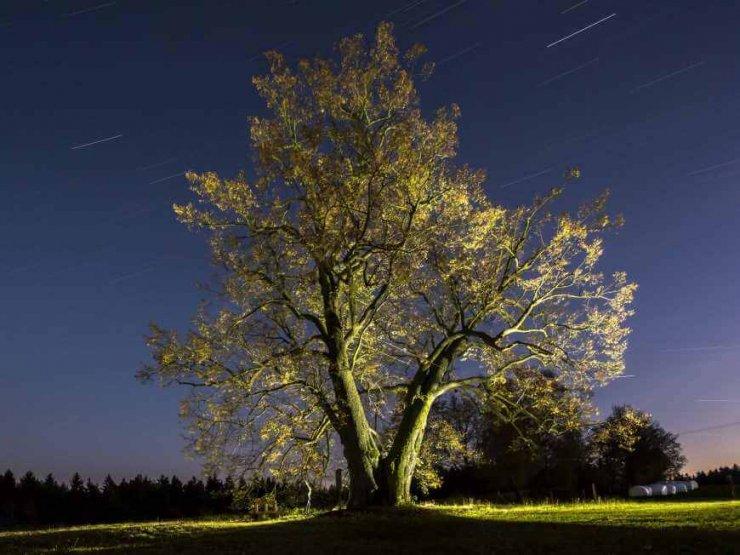 Katero bo evropsko drevo leta?