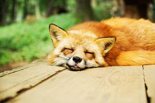 sleepy_15