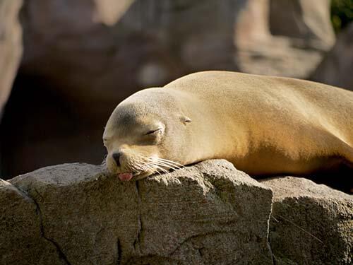sleepy_3