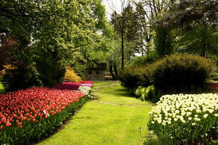Zacvetite s tulipani - v Mozirskem gaju