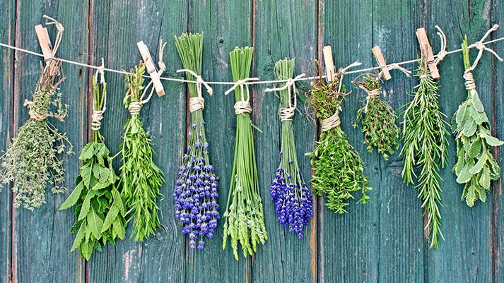 5 zanimivih zelišč za letošnji vrt – 1. del
