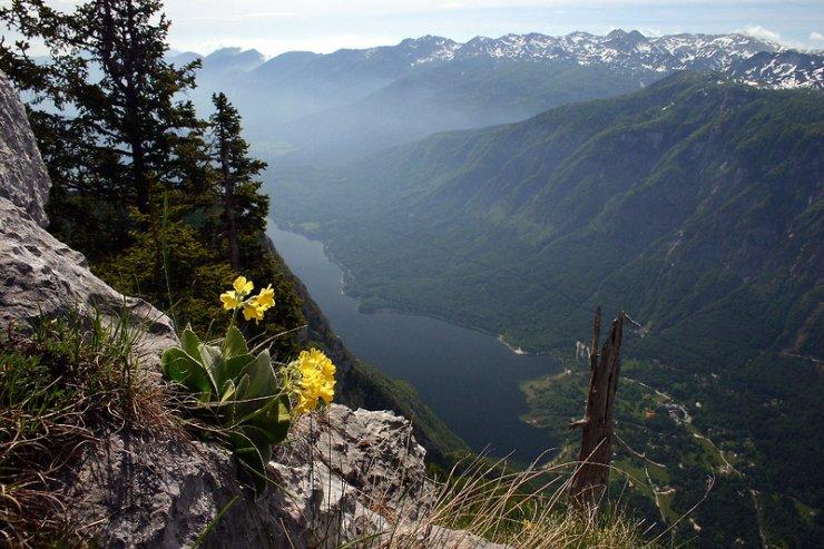 V tujih medijih odkrivajo lepote slovenske narave: cvetoči travniki v Bohinju