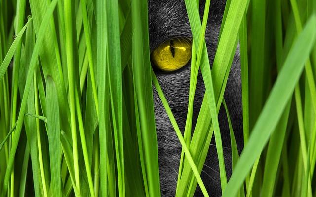Naredimo sami: Notranji vrtiček za mačke