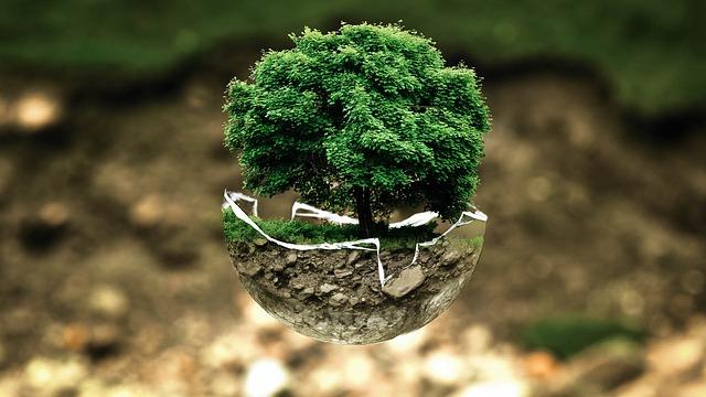 Odkrili številne nove gozdove po svetu - pokritost z gozdom 'narasla'