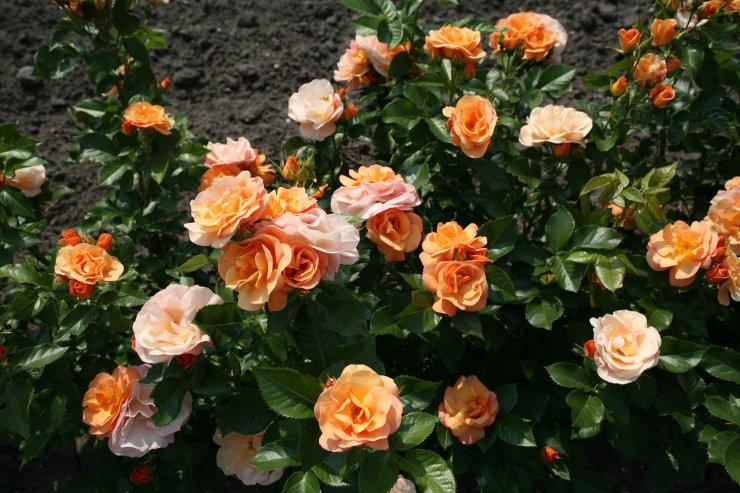 Ta konec tedna praznuje vrtnica Portorož