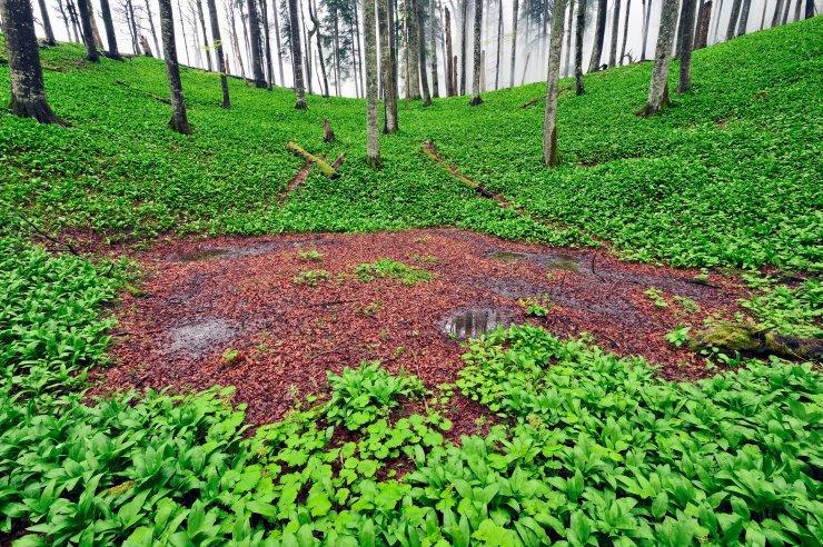 Vpis slovenskih bukovih gozdov Pragozd Krokar in Snežnik-Ždrocle na UNESCO Seznam svetovne dediščine