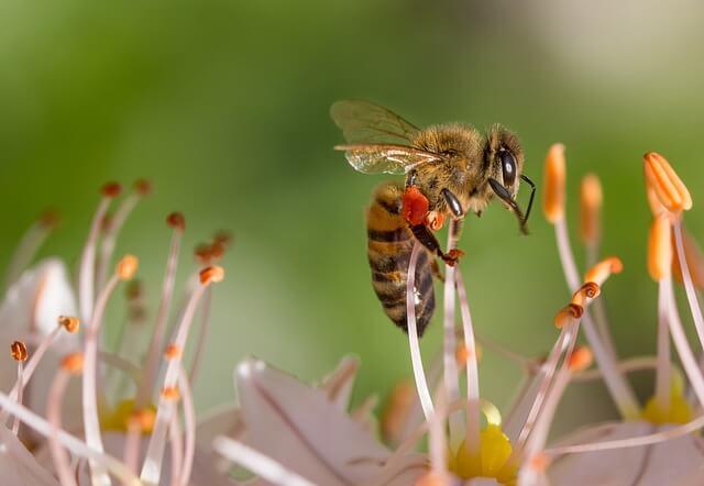 Skoraj 200 držav soglasno podprlo slovensko pobudo za Svetovni dan čebel
