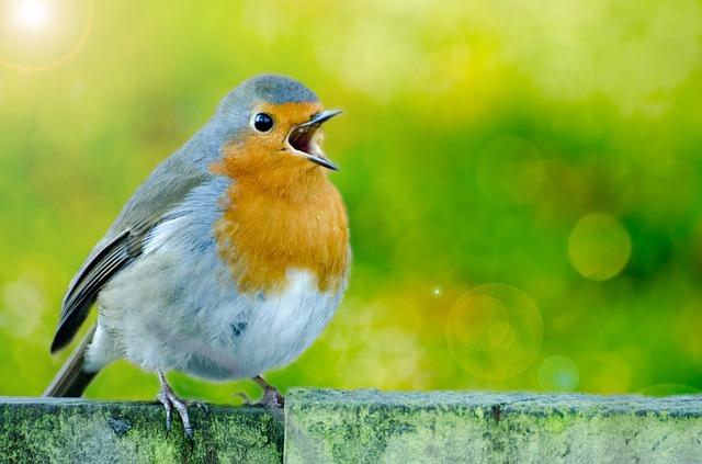 Kaj nam o grožnji podnebnih sprememb pripovedujejo ptice?