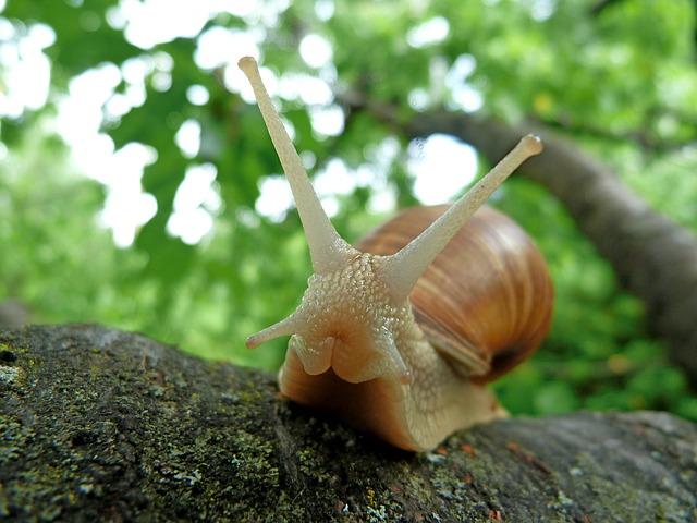 snails-382992_640