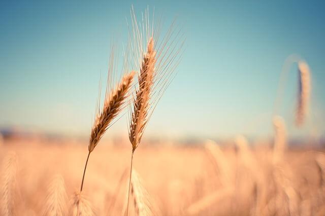 Ob svetovnem dnevu zadrug: v Sloveniji imajo ključno vlogo za zagotavljanje lokalne hrane