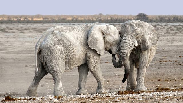 Pomagajmo slonom s pomočjo učenja slonjega jezika