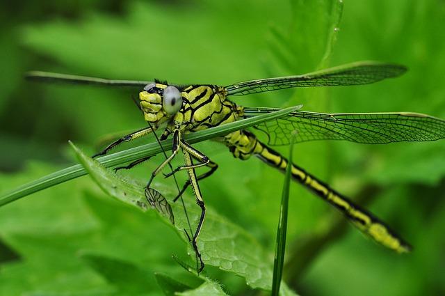 dragonfly-122787_640